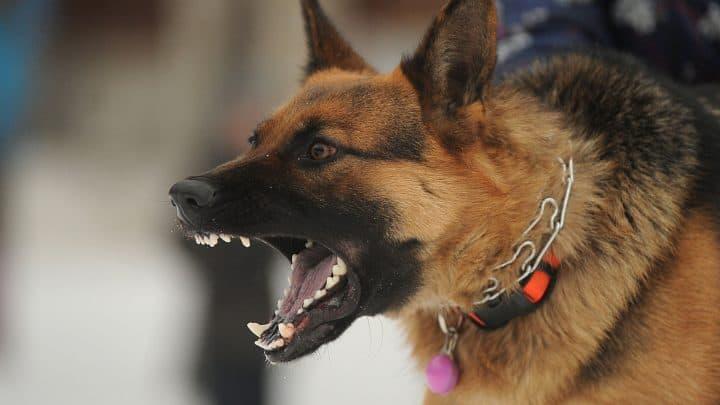 5 Zeichen, Dass Du Einen Problemhund Hast!