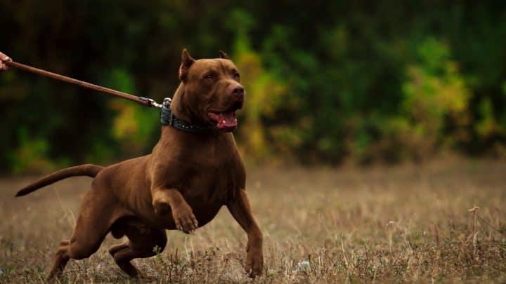 Aggressiver Hund – Wie Umgehen Mit Einem Aggressiven Hund?