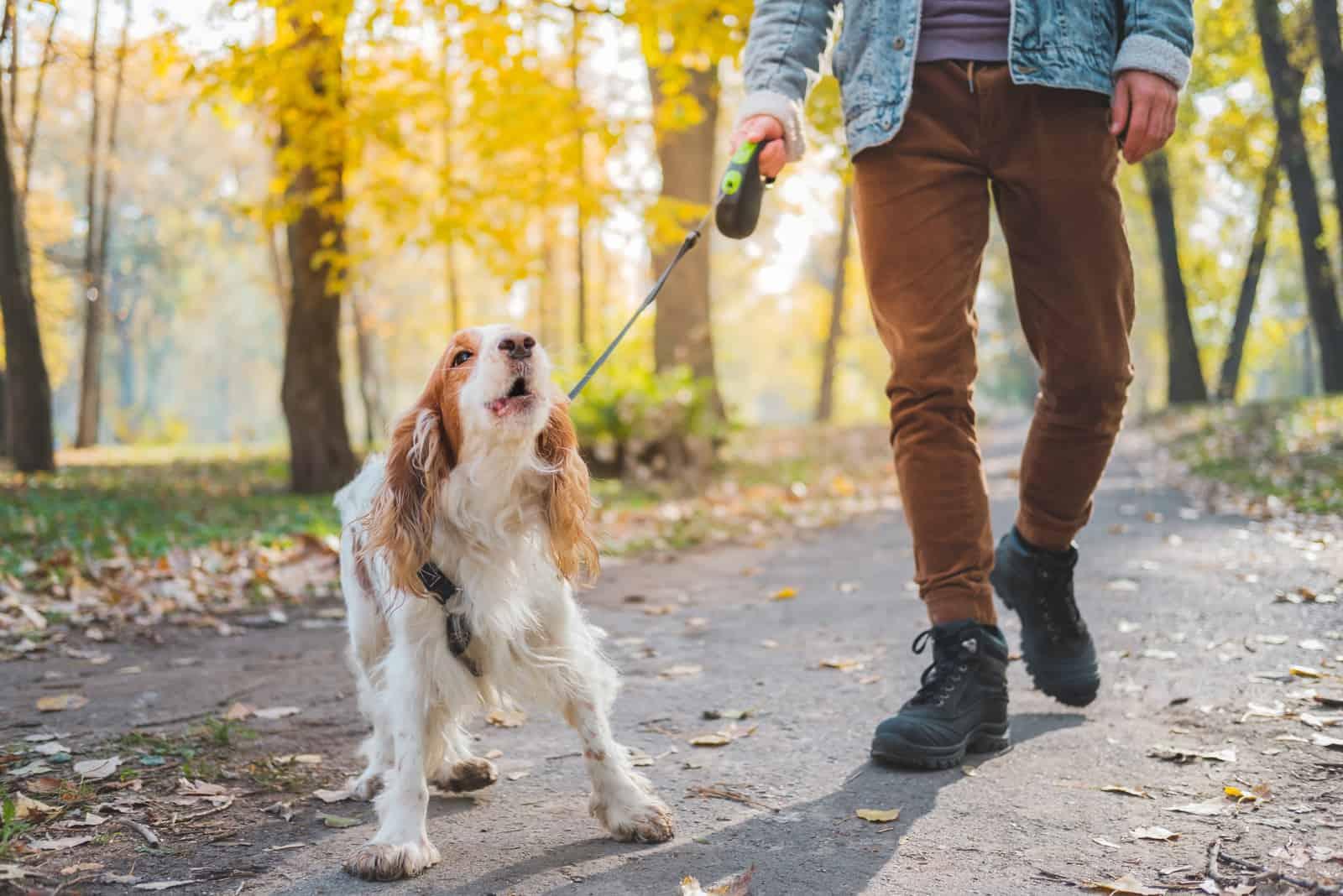Bellender Hund an der Leine im Freien