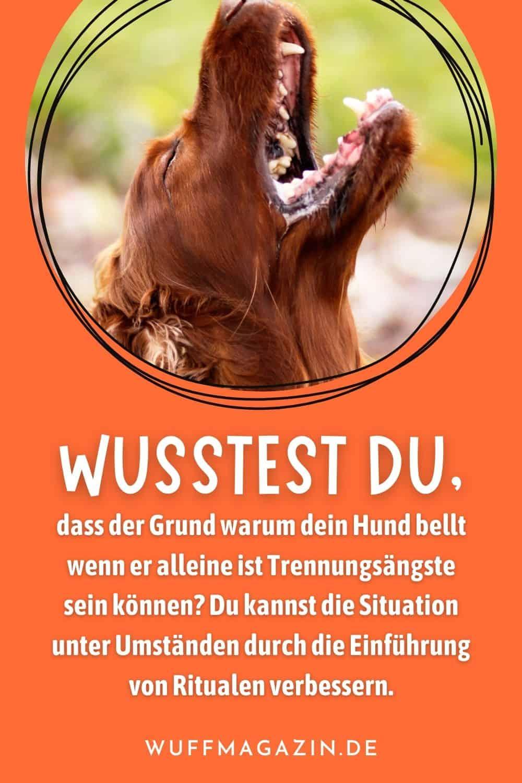 Dein Hund Bellt, Wenn Er Alleine Ist - Was Nun