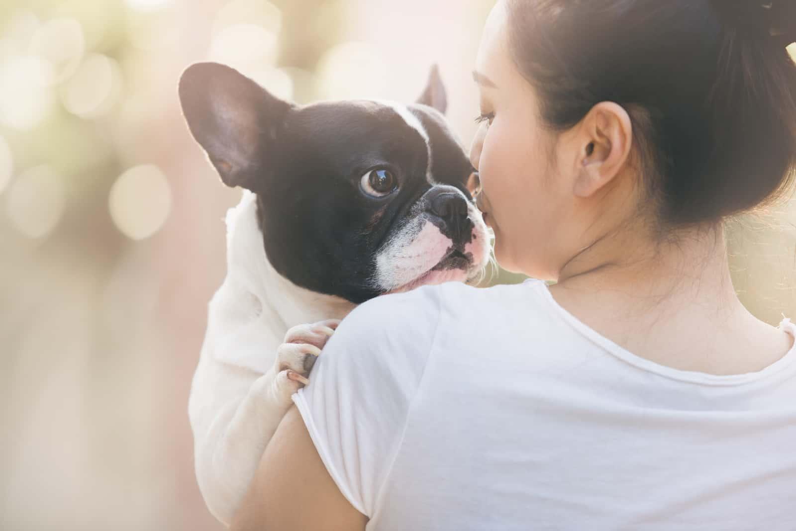 Französische Bulldogge ist süßes küssendes Mädchen