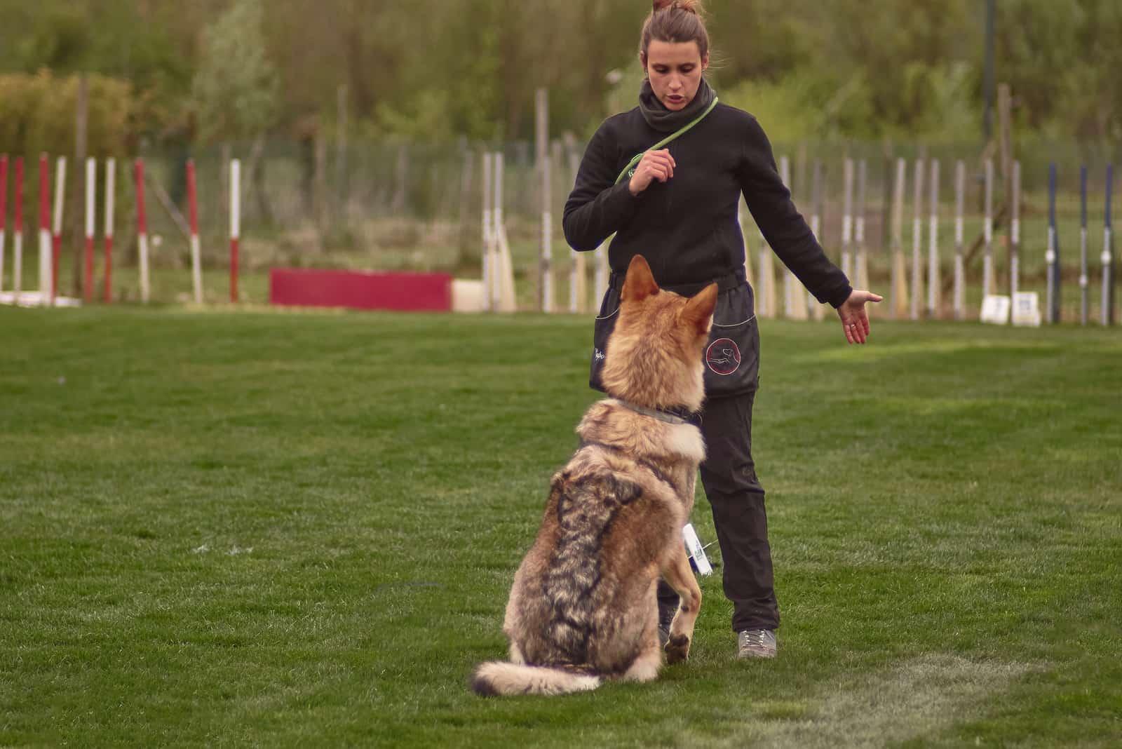 Hundetrainer beim Training eines Wolfshundes