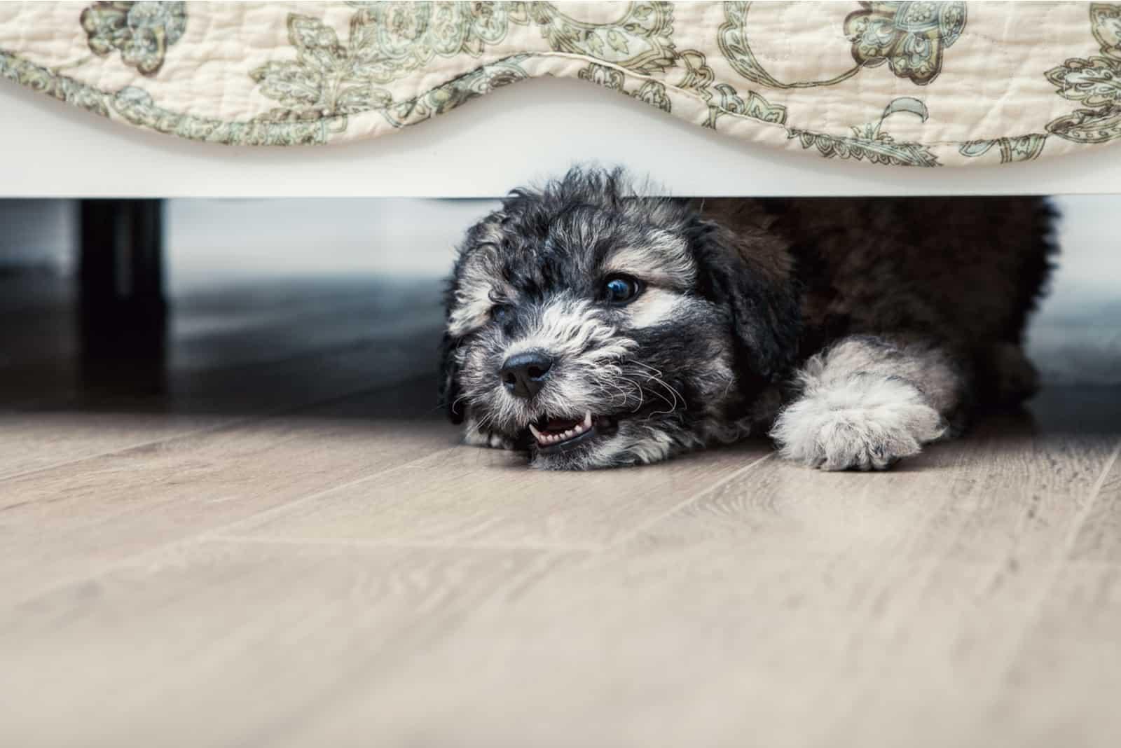 Kleiner wütender Welpe unter dem Bett