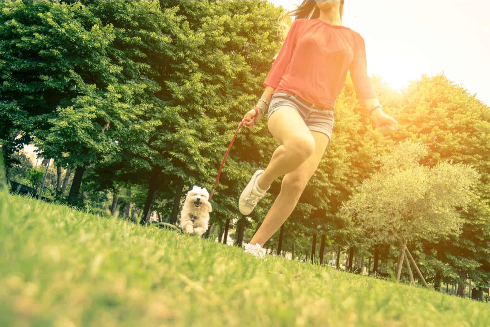 Welpe weißer Hund läuft mit seinem Besitzer.