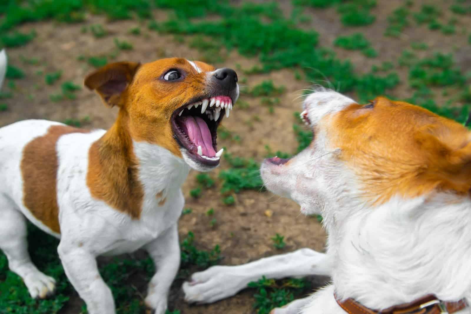 Zwei Hunde kämpfen auf der Straße