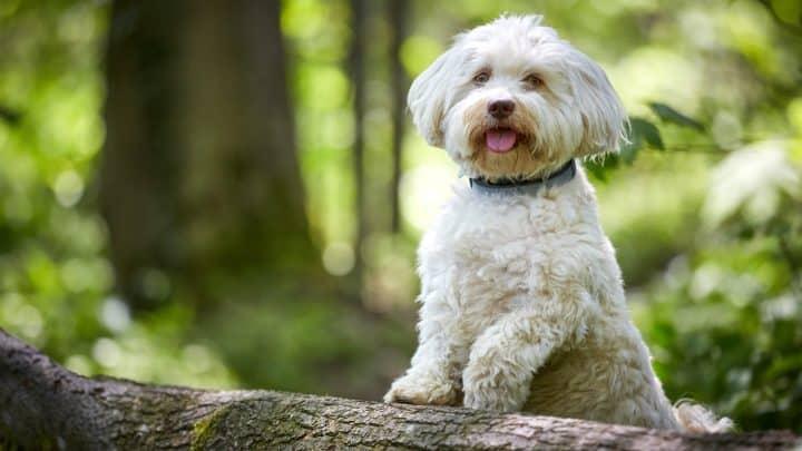 Hund stehend auf einem Baumstamm