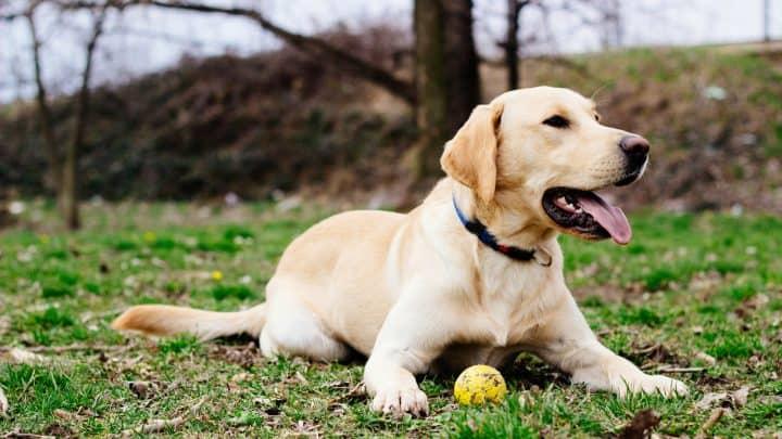 Dein Hund atmet schnell – Ist das normal oder ist das ein Alarmsignal?