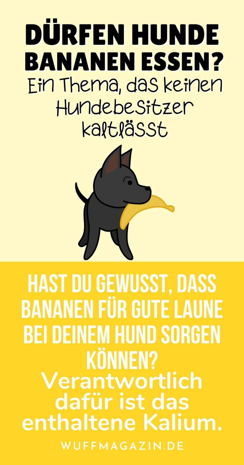 Dürfen Hunde Bananen essen Ein Thema, das keinen Hundebesitzer kaltlässt