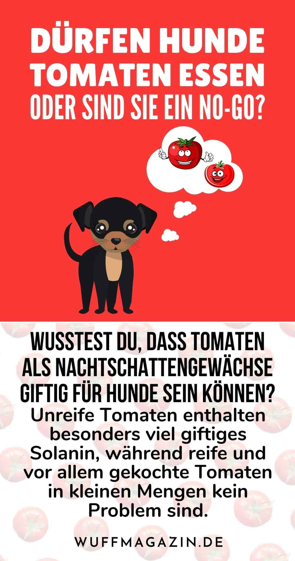 Dürfen Hunde Tomaten essen oder sind sie ein No-Go