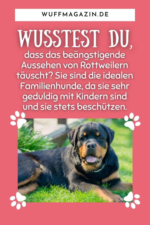 Familienhunde für Anfänger - Liste der Top 20 Hunderassen