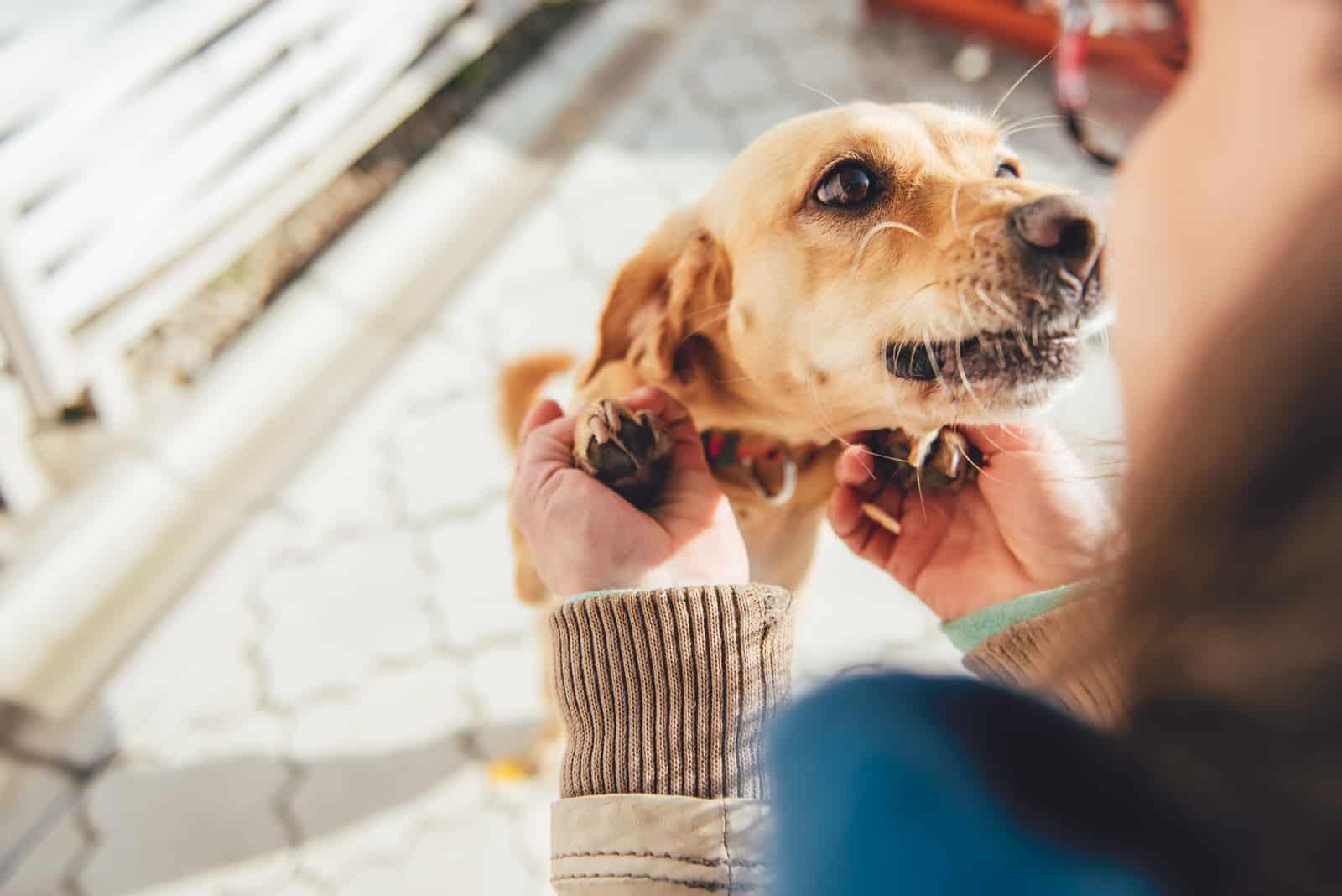 Frau, die ihren kleinen gelben Hund kuschelt