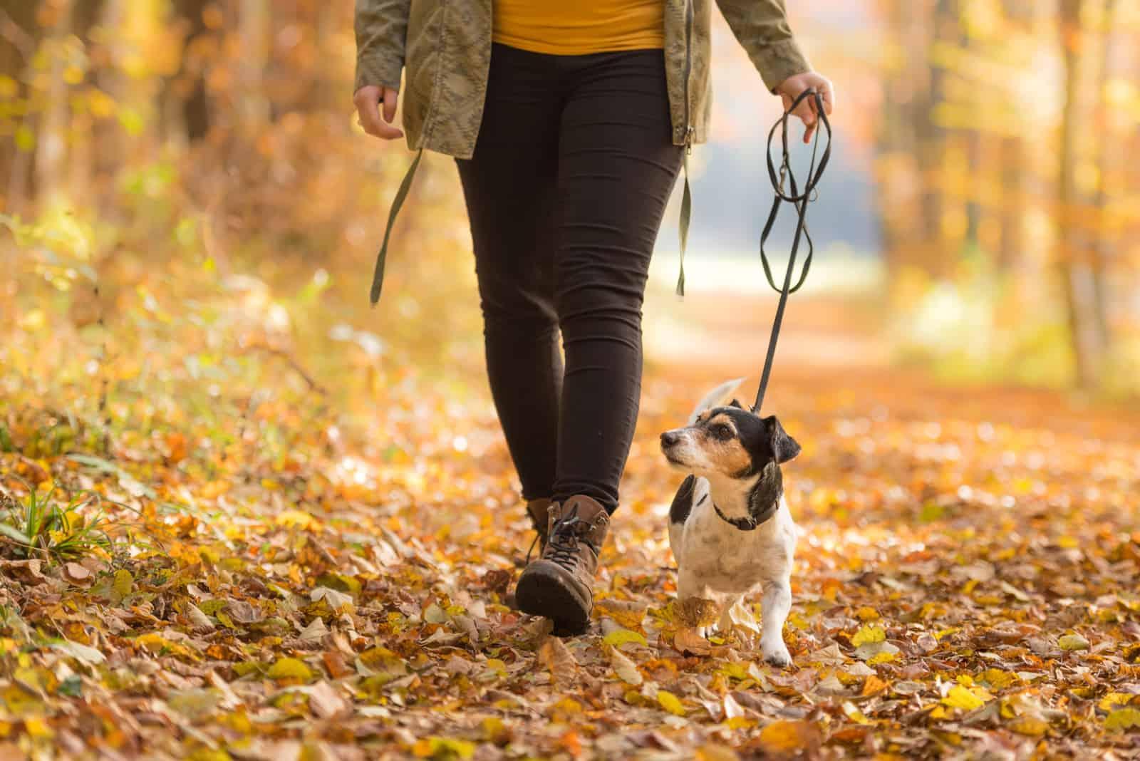 Frau geht mit einem Hund spazieren