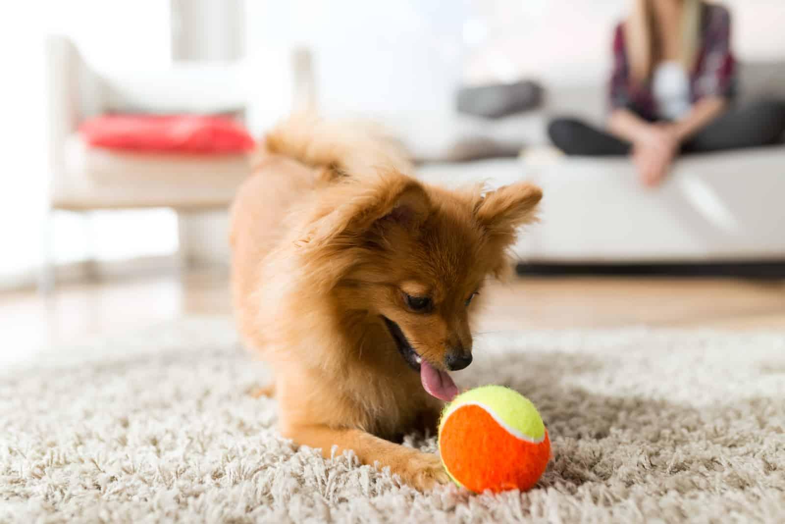 Frau mit ihrem Hund spielt mit Ball