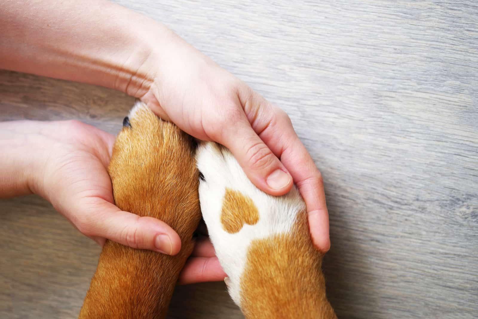 Freundschaft zwischen Besitzer und Hund
