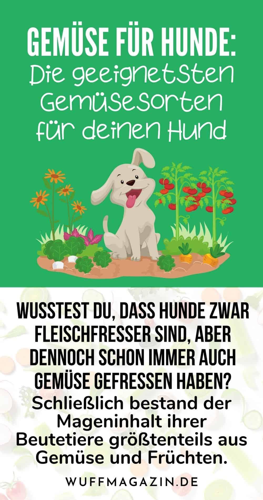 Gemüse Für Hunde Die Geeignetsten Gemüsesorten Für Deinen Hund