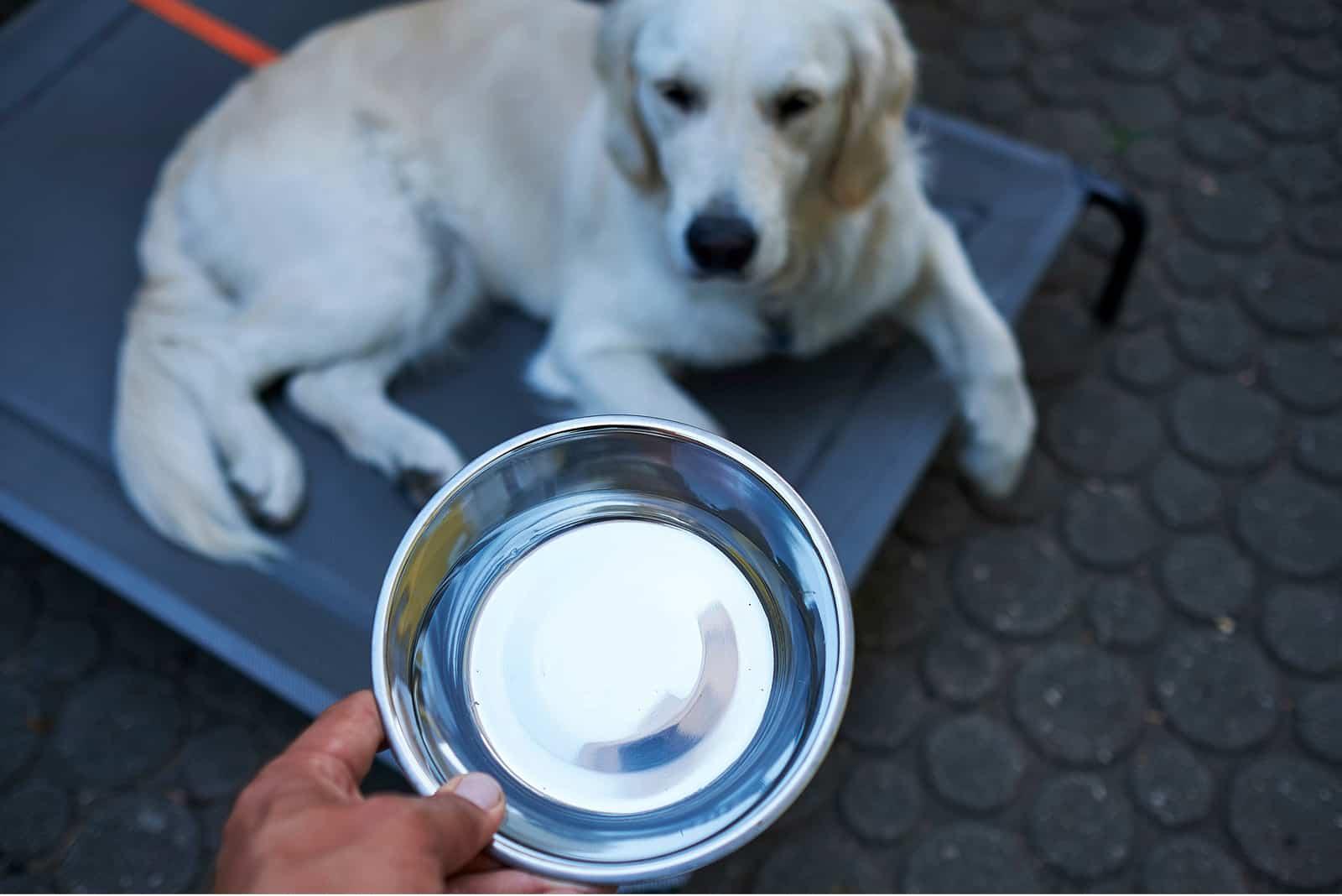 Hund bekommt eine Schüssel Wasser