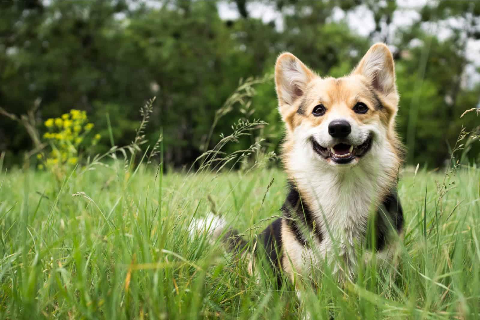 Hund draußen im Gras an einem sonnigen Sommertag