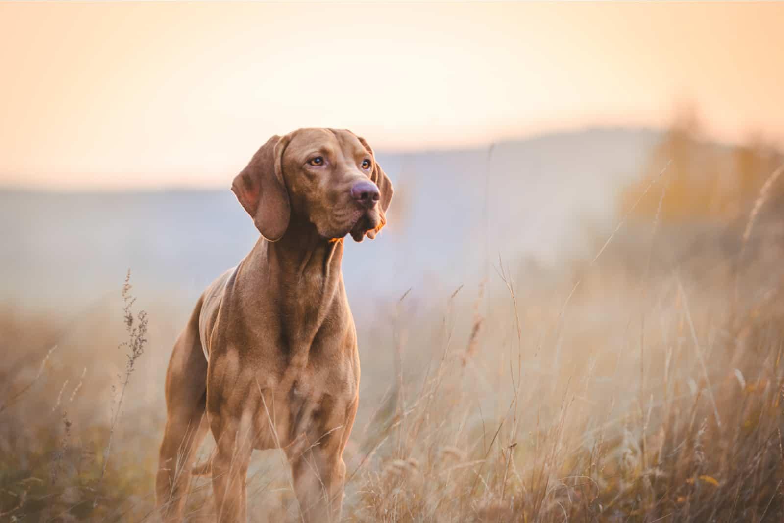 Hund im Herbst auf dem Feld