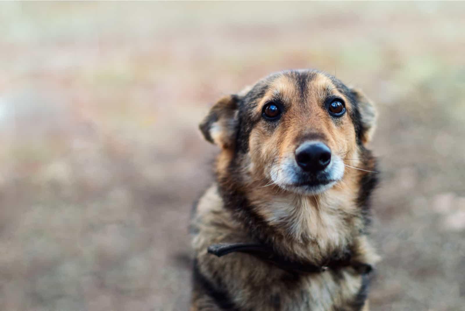 Hund mit sehr traurigen Augen