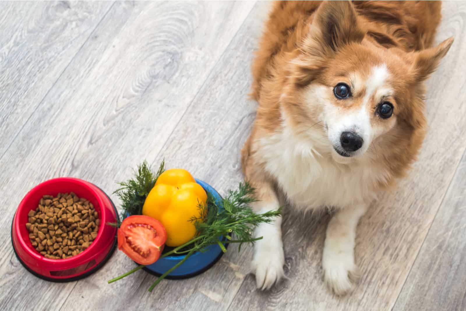Hund neben Trockenfutter und frischem Gemüse