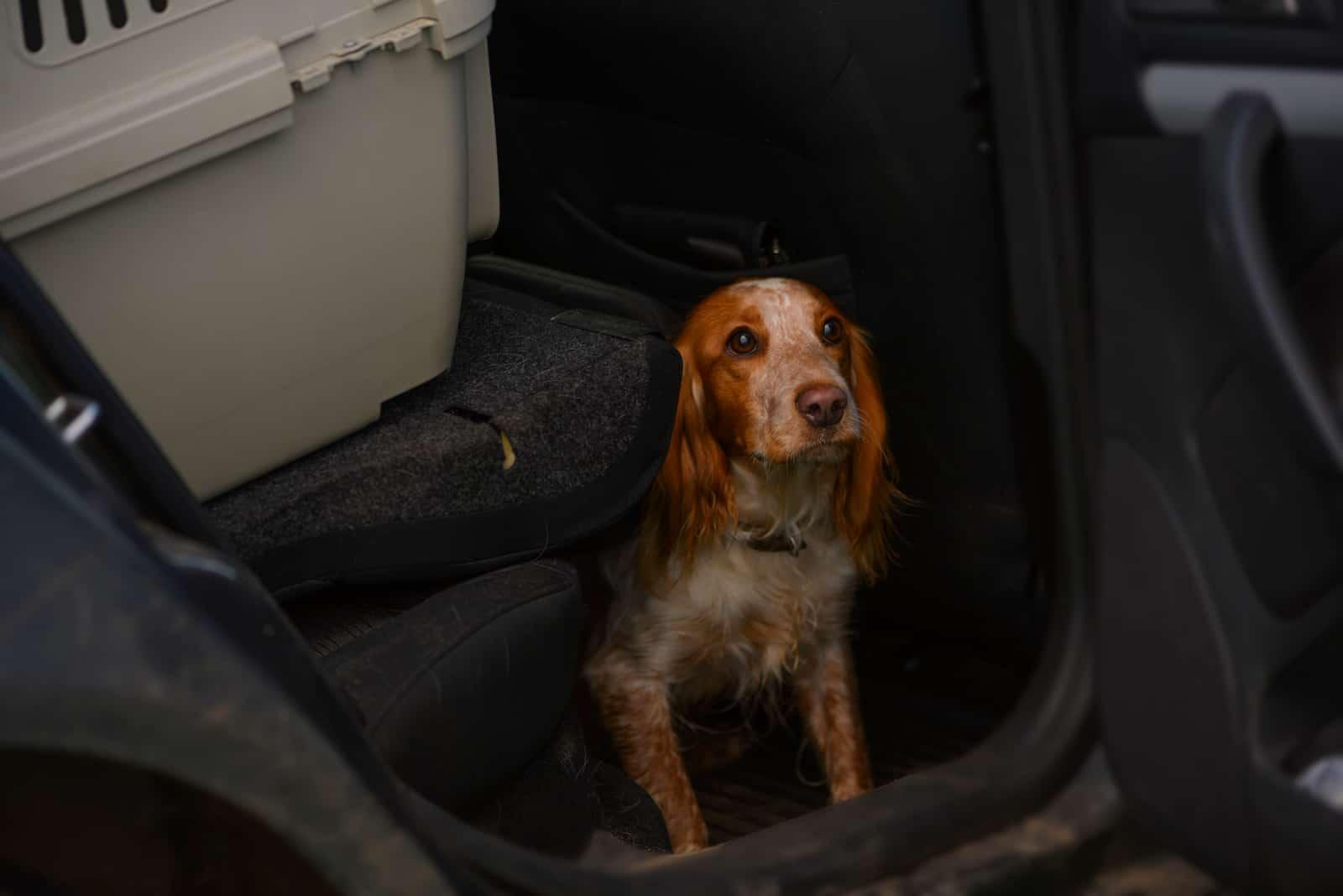 Hund versteckt sich im Auto