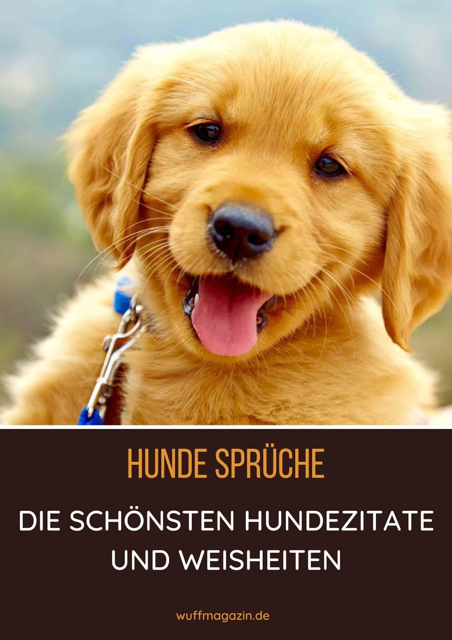 Hunde Sprüche: Die Schönsten Hundezitate Und Weisheiten