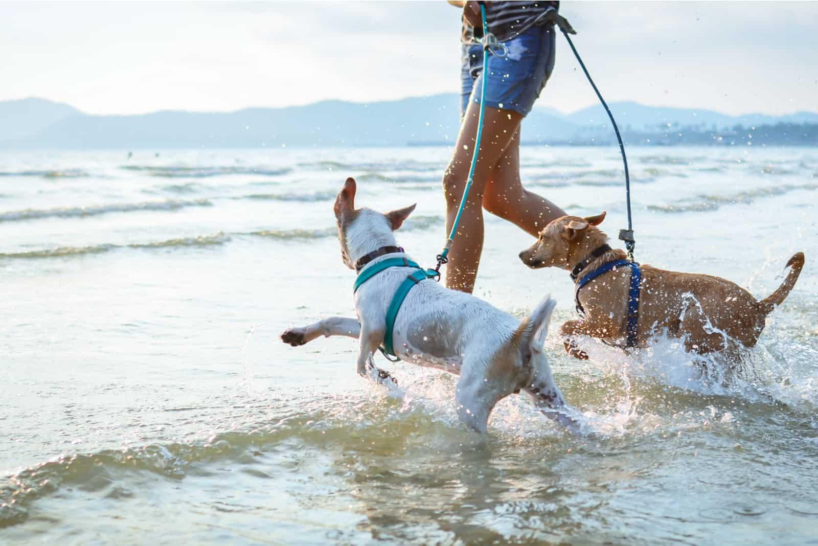 Hunde spielen gerne am Strand mit dem Besitzer