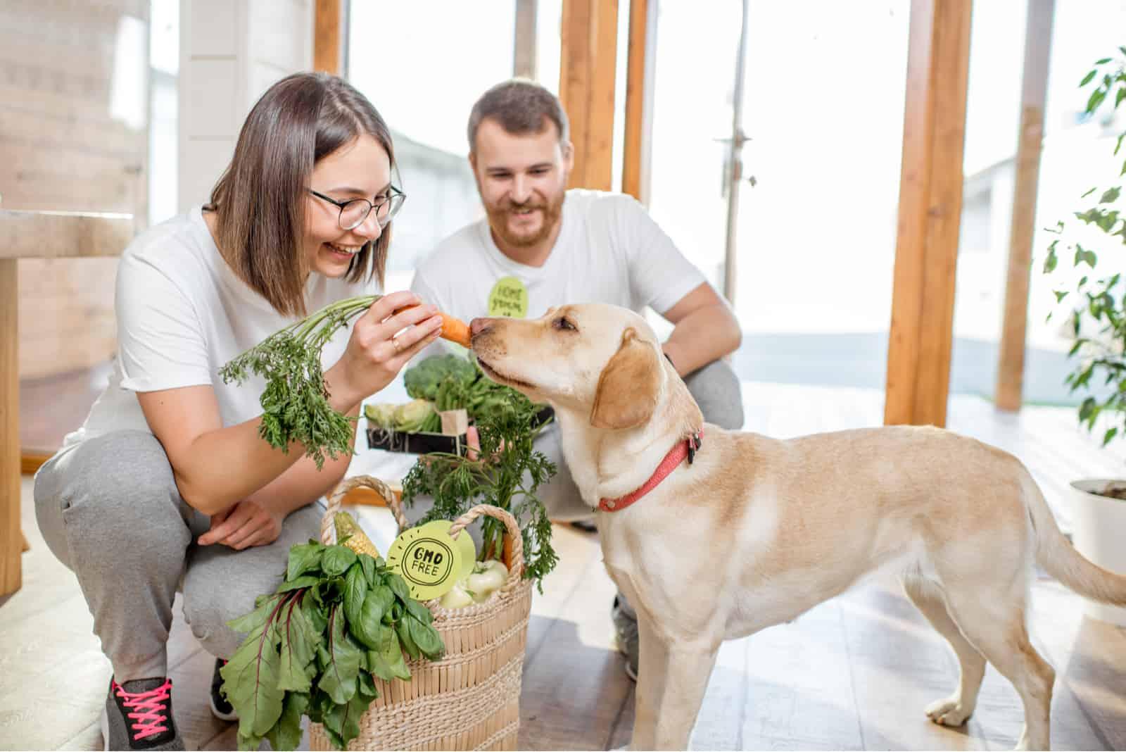 Junges Paar, das seinen Hund mit gesundem grünem Futter vom Öko-Markt zu Hause füttert