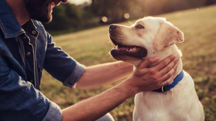 Lebensweisheiten –  Hunde Zitate zum Nachdenken