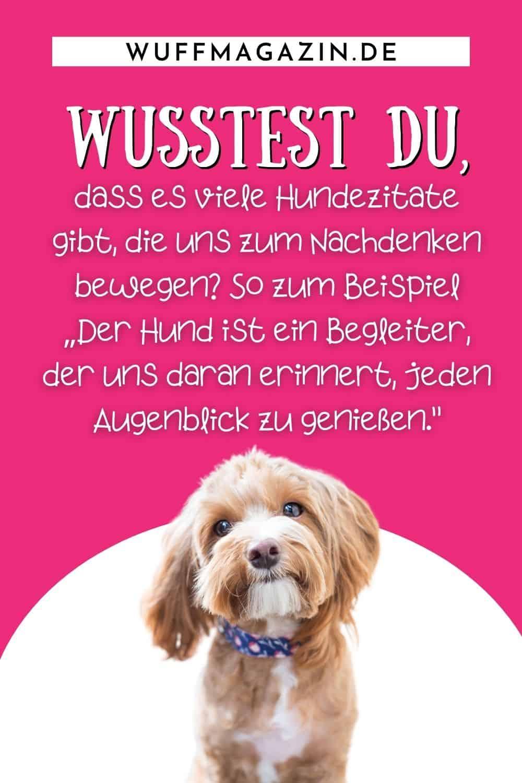 Lebensweisheiten - Hunde Zitate zum Nachdenken