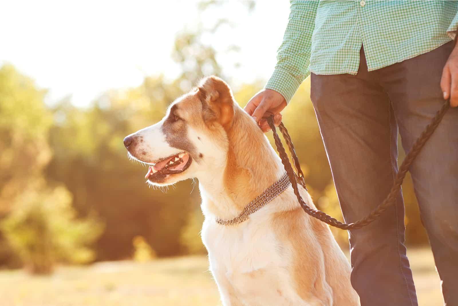 Mann und Hund im Park