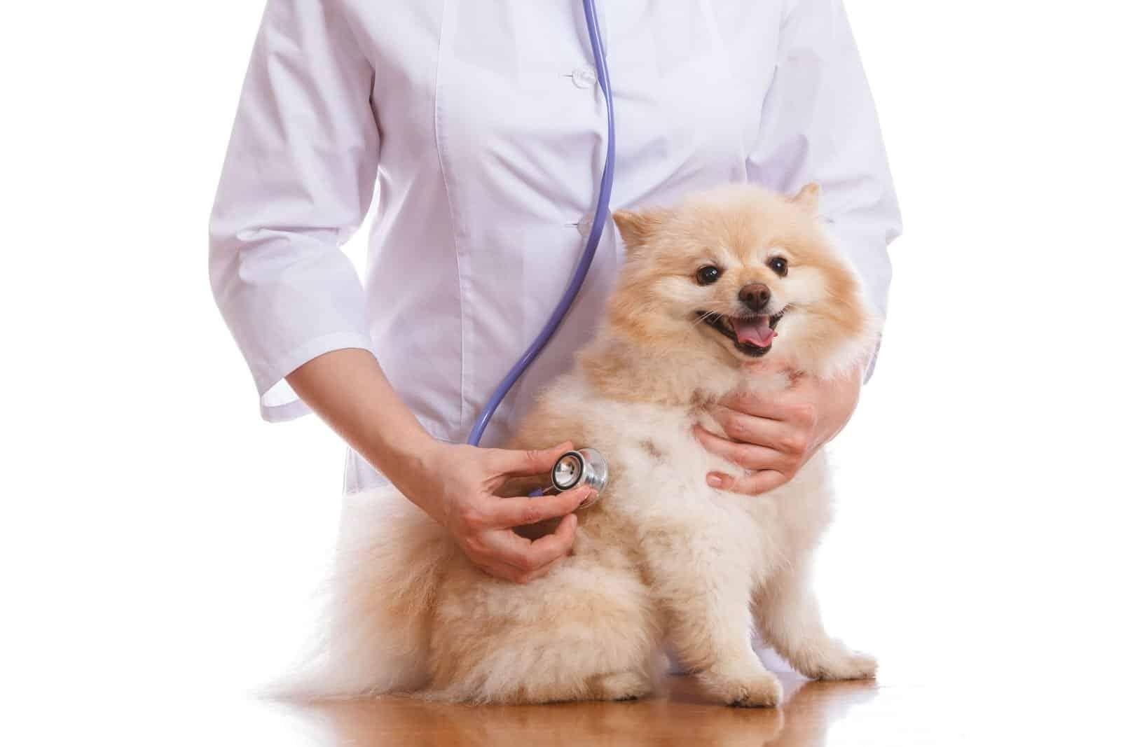 Pommersche Weide beim Tierarzt