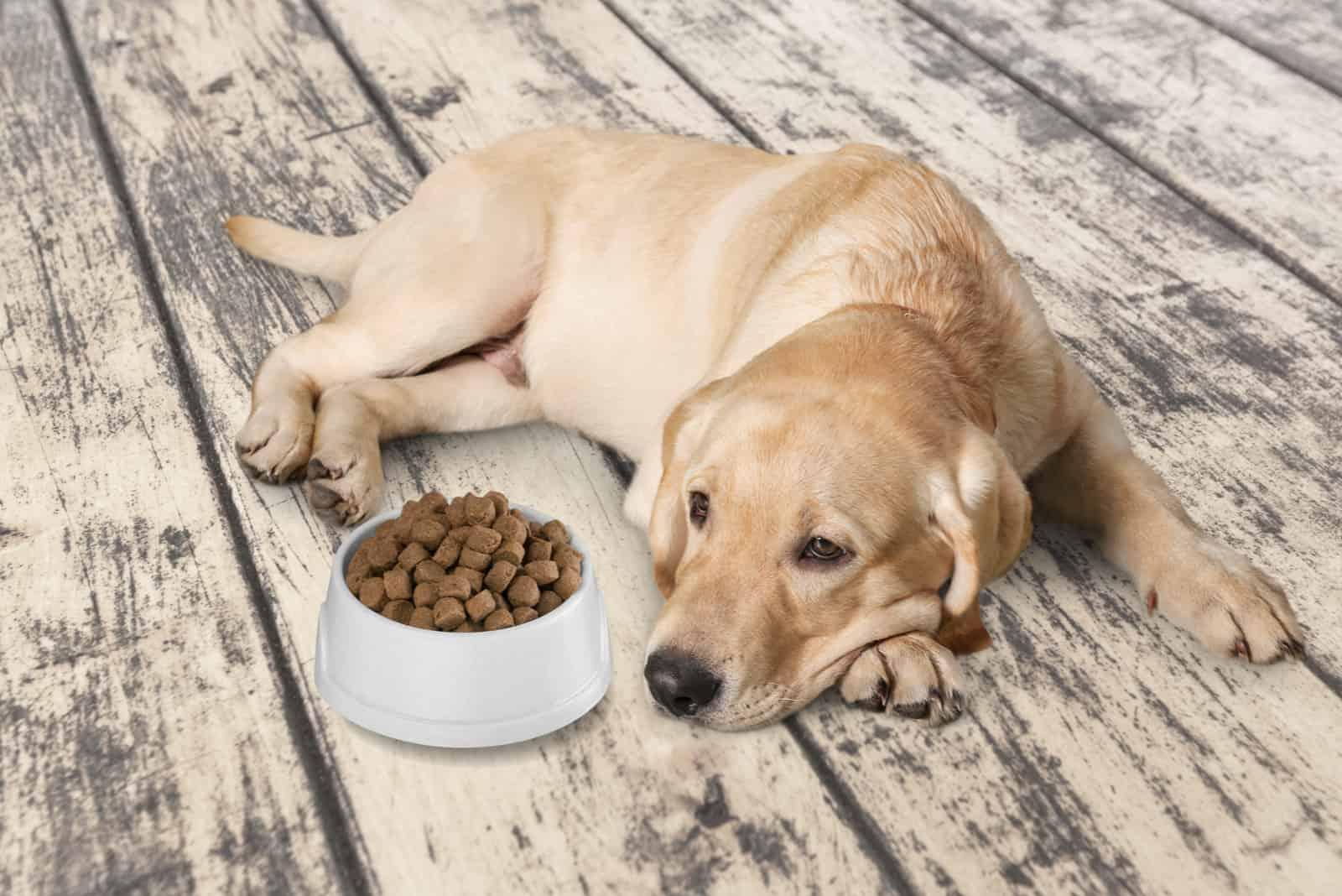 Schöner Haushund auf dem Boden mit Futter in der Schüssel