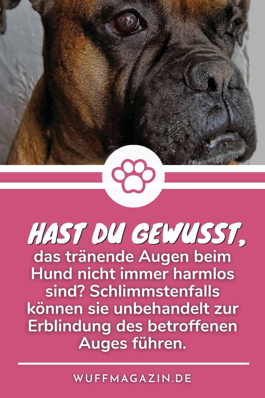 Warum Treten Tränende Augen Beim Hund Auf - Über Ursachen Und Probleme
