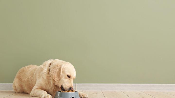 Wie oft den Hund füttern? Ein – oder zweimal am Tag?