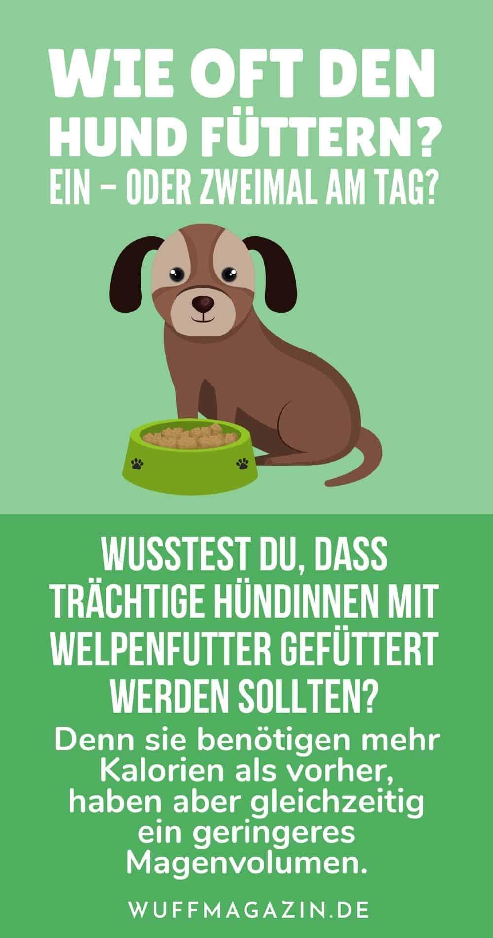 Wie oft den Hund füttern Ein - oder zweimal am Tag