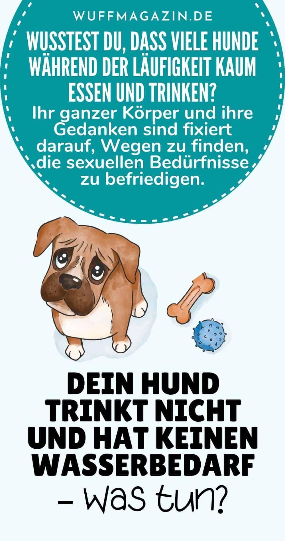 Dein Hund trinkt nicht und hat keinen Wasserbedarf - Was tun