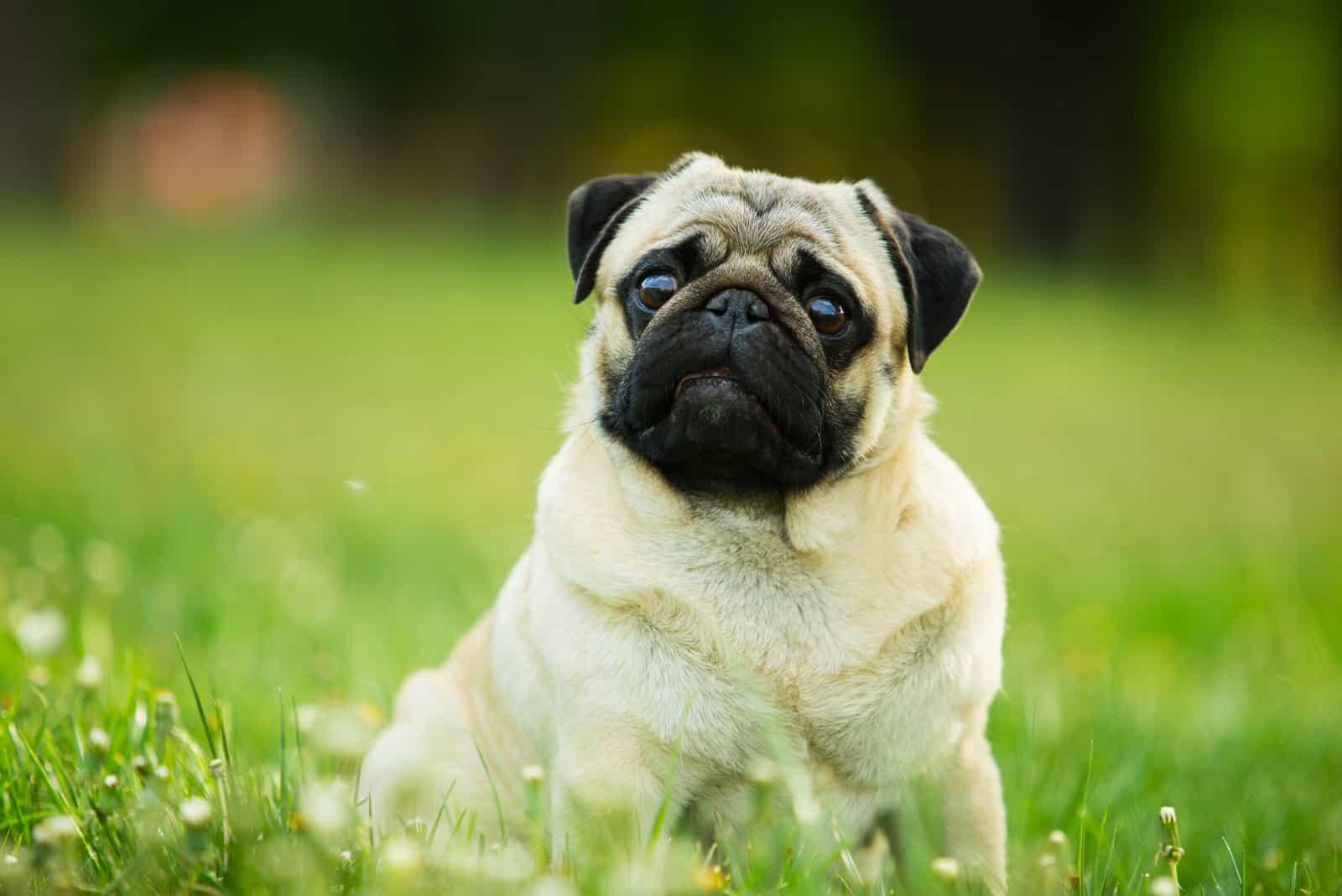 süßer Hund, der auf dem Gras sitzt