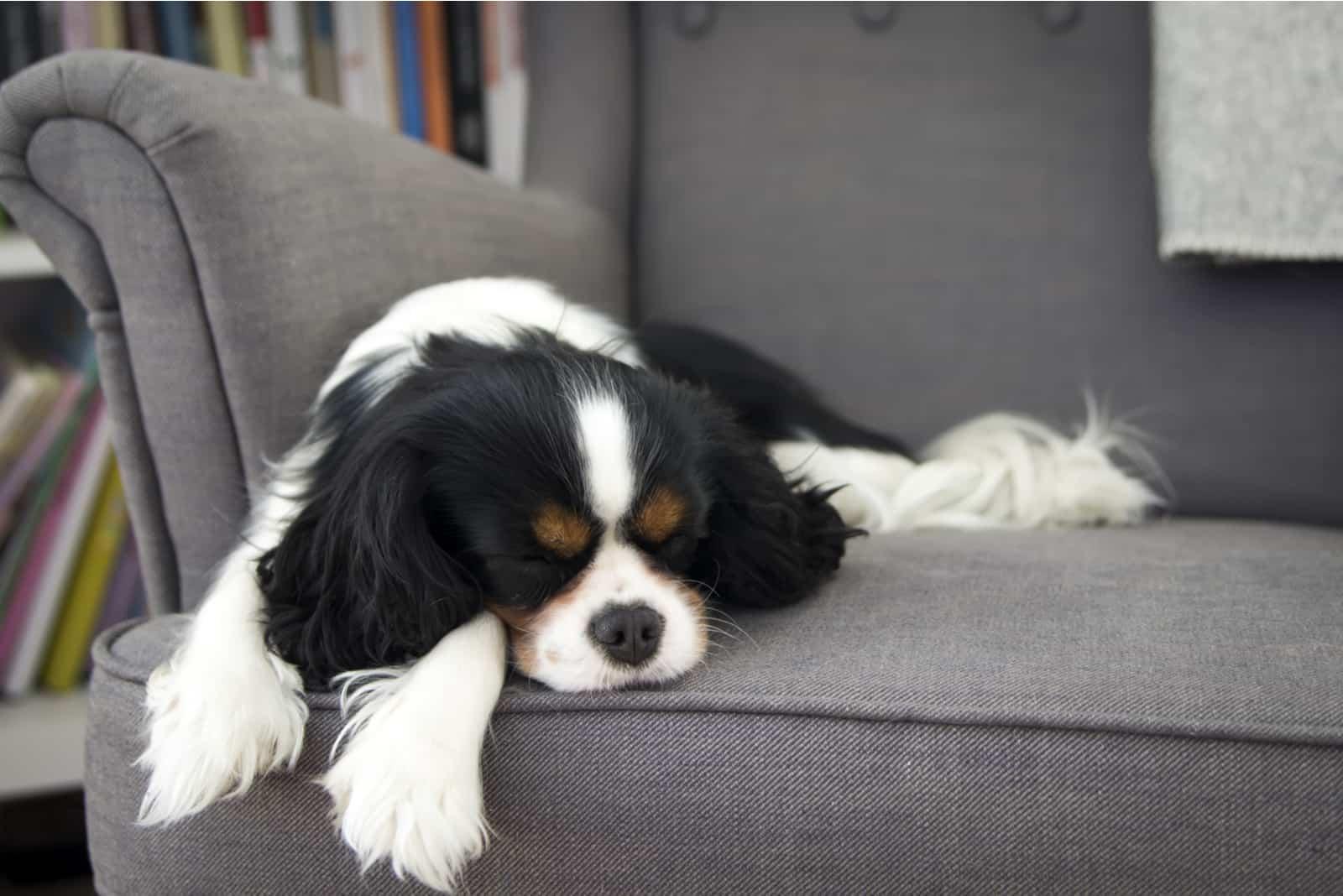 süßer Hund, der auf dem Sofa schläft
