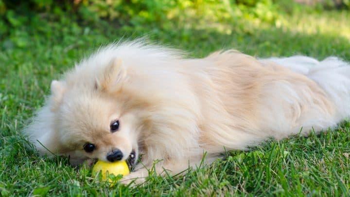 Dürfen Hunde Birnen essen? Wie Vitamine im Futternapf landen