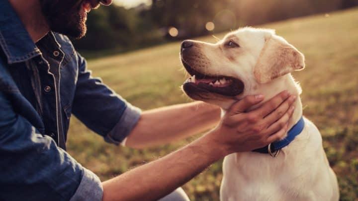 Du musst Hundepsychologie nicht studieren – Hier gibts die Fakten für dich!