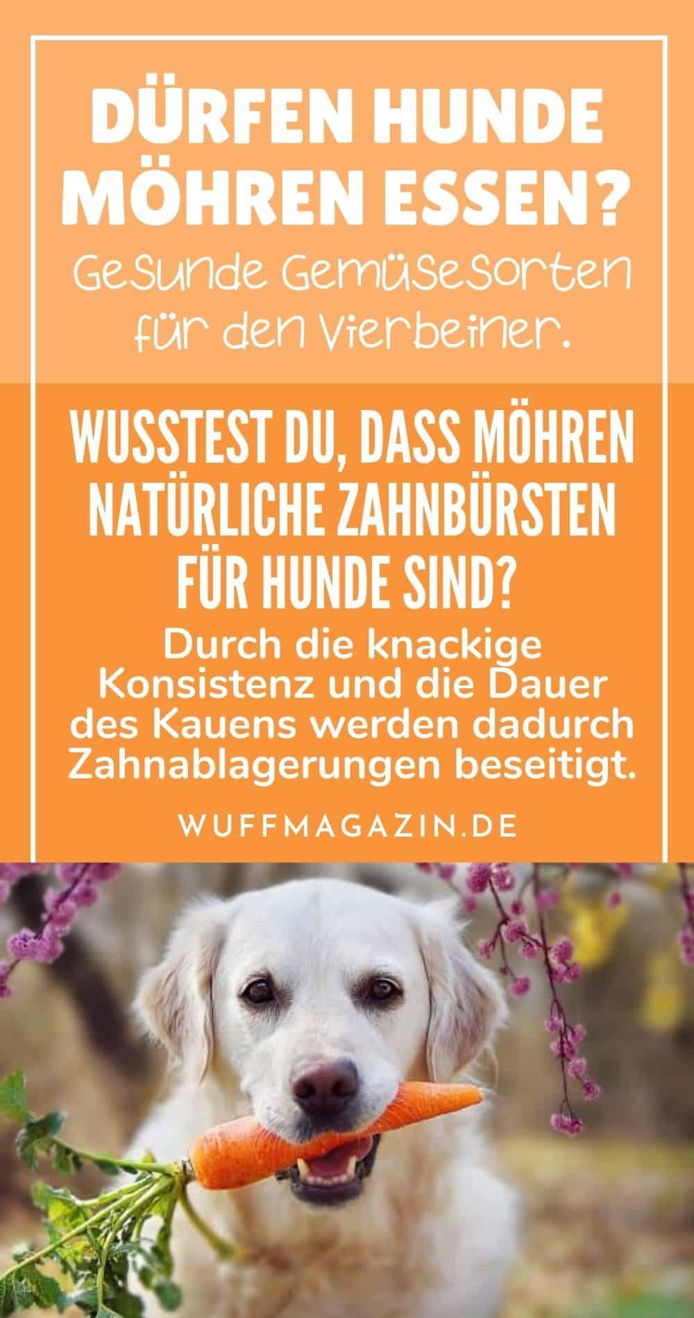 Dürfen Hunde Möhren essen Gesunde Gemüsesorten für den Vierbeiner