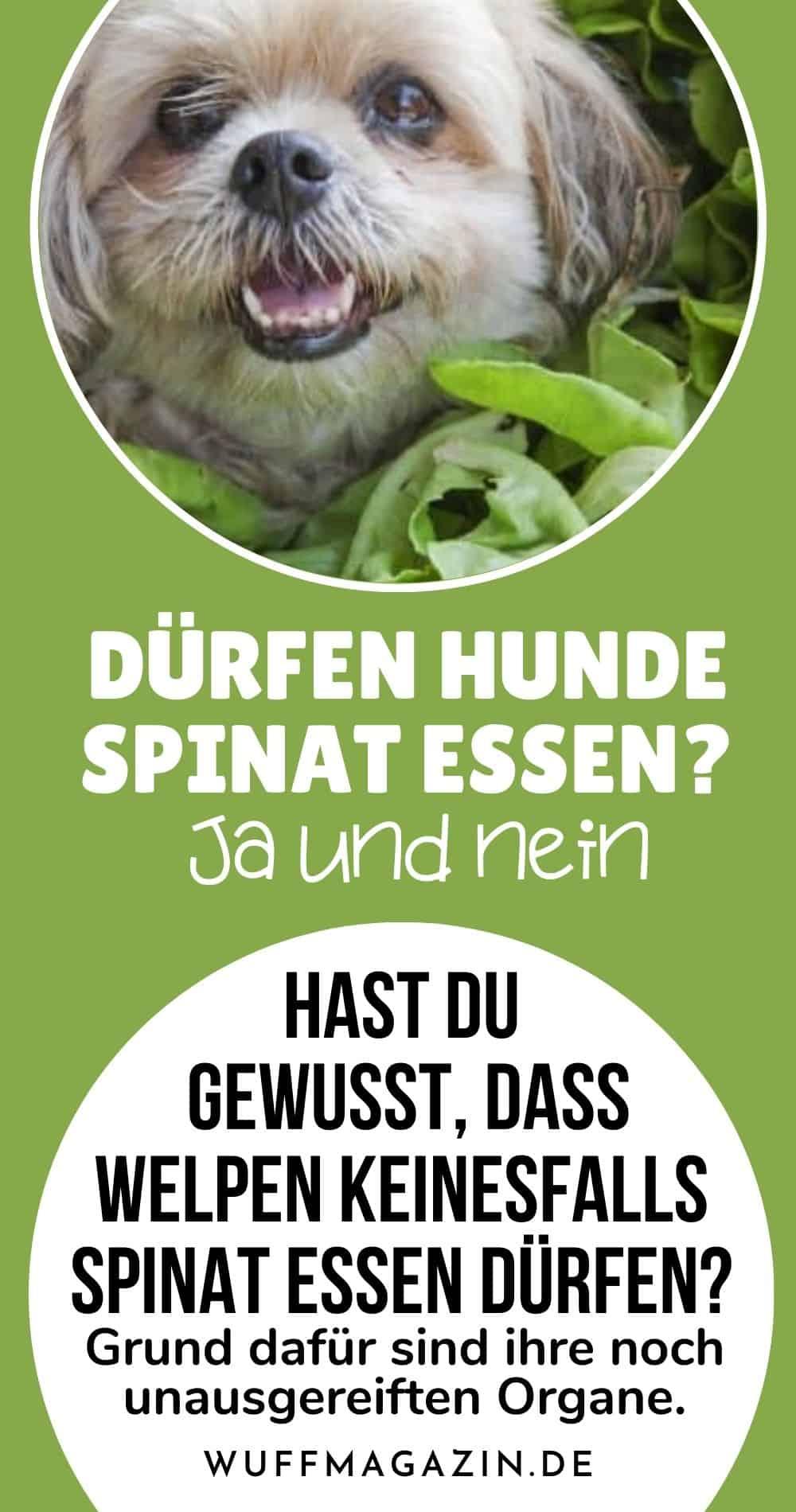Dürfen Hunde Spinat essen Ja und Nein