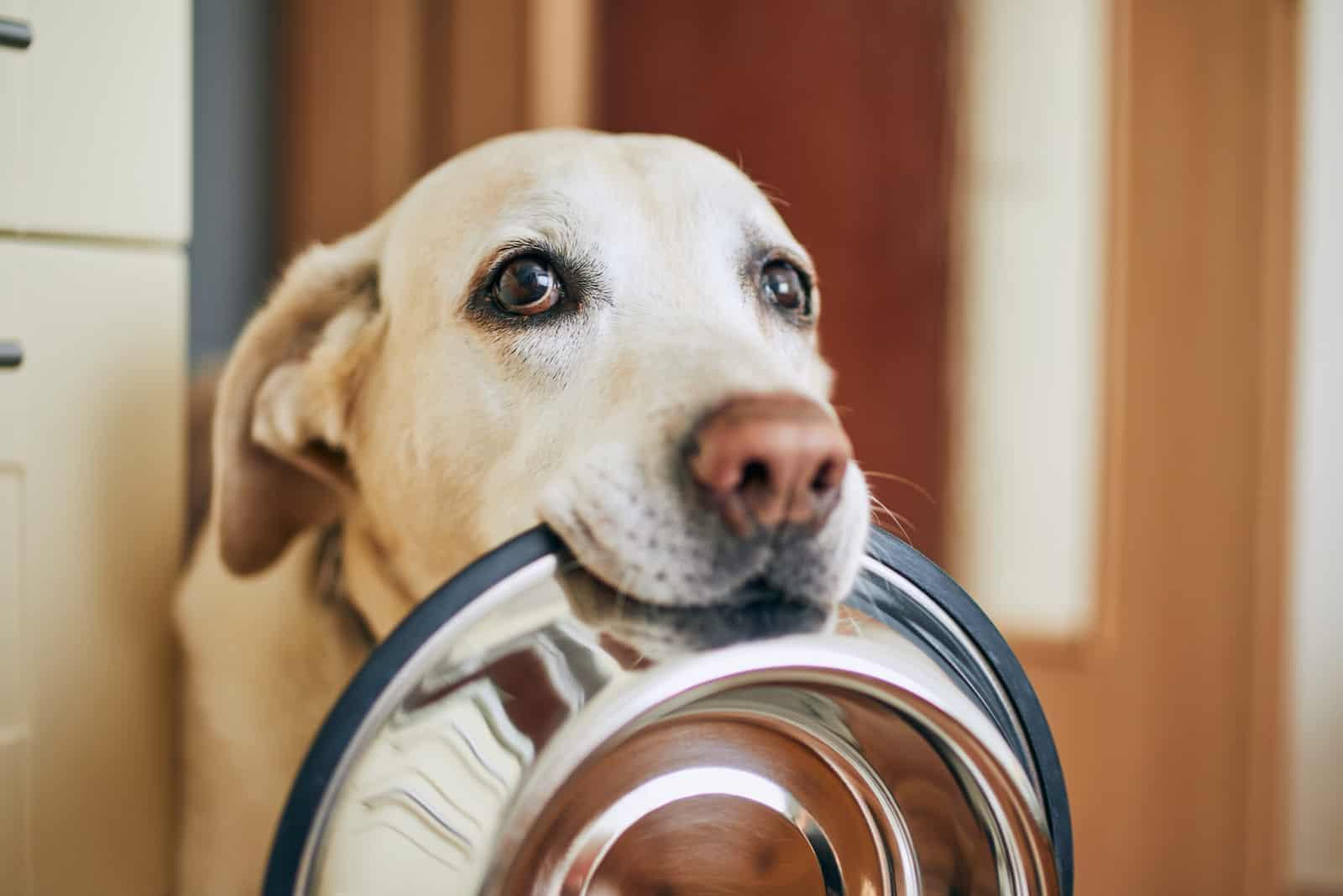 Ein hungriger Hund hält einen leeren Behälter im Mund