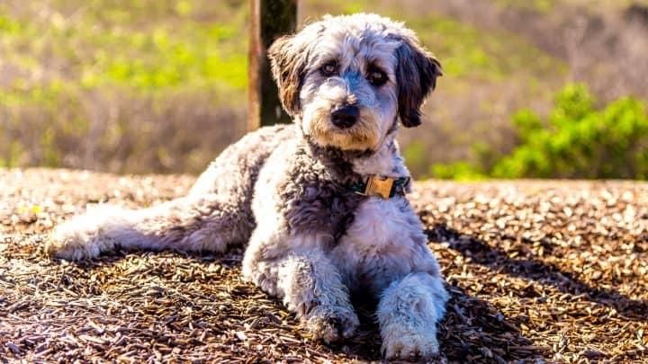 schöner Hund liegend youtube