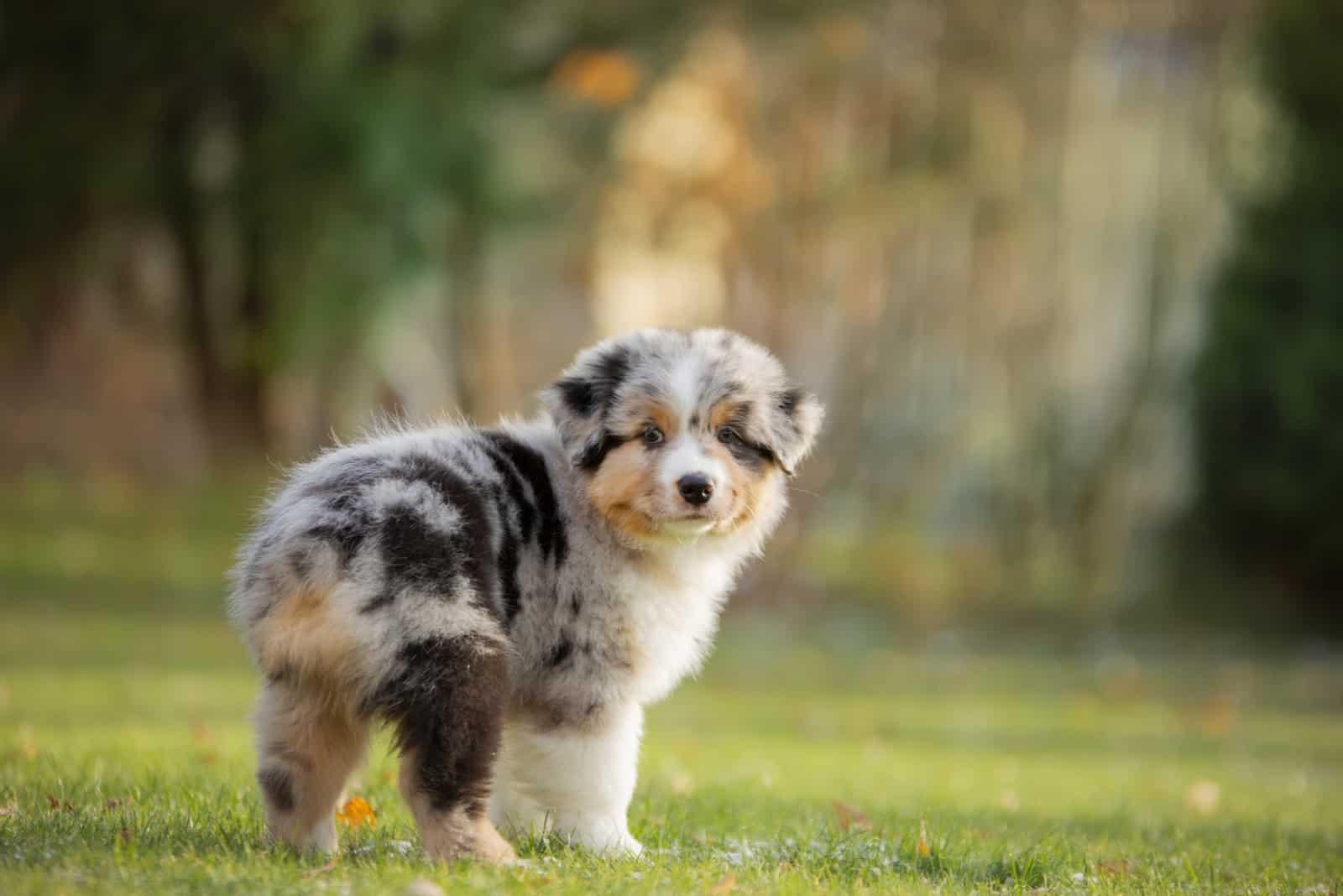 Hund im Hof auf dem Rasen