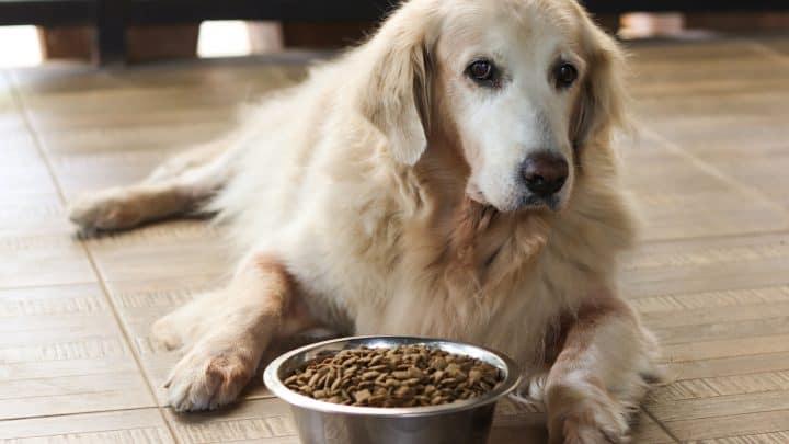 Mein Hund frisst nicht! Was man über das Fressverhalten wissen sollte