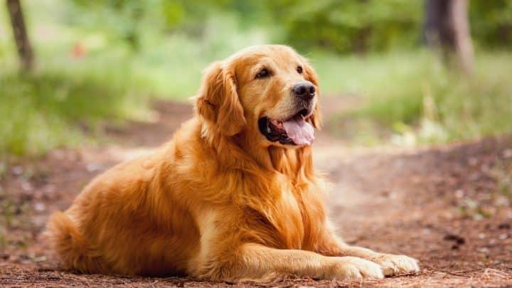 Mundgeruch beim Hund – Die Ursachen und die besten Lösungen
