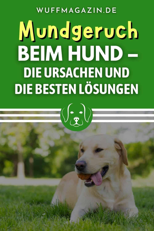 Mundgeruch beim Hund - Die Ursachen und die besten Lösungen