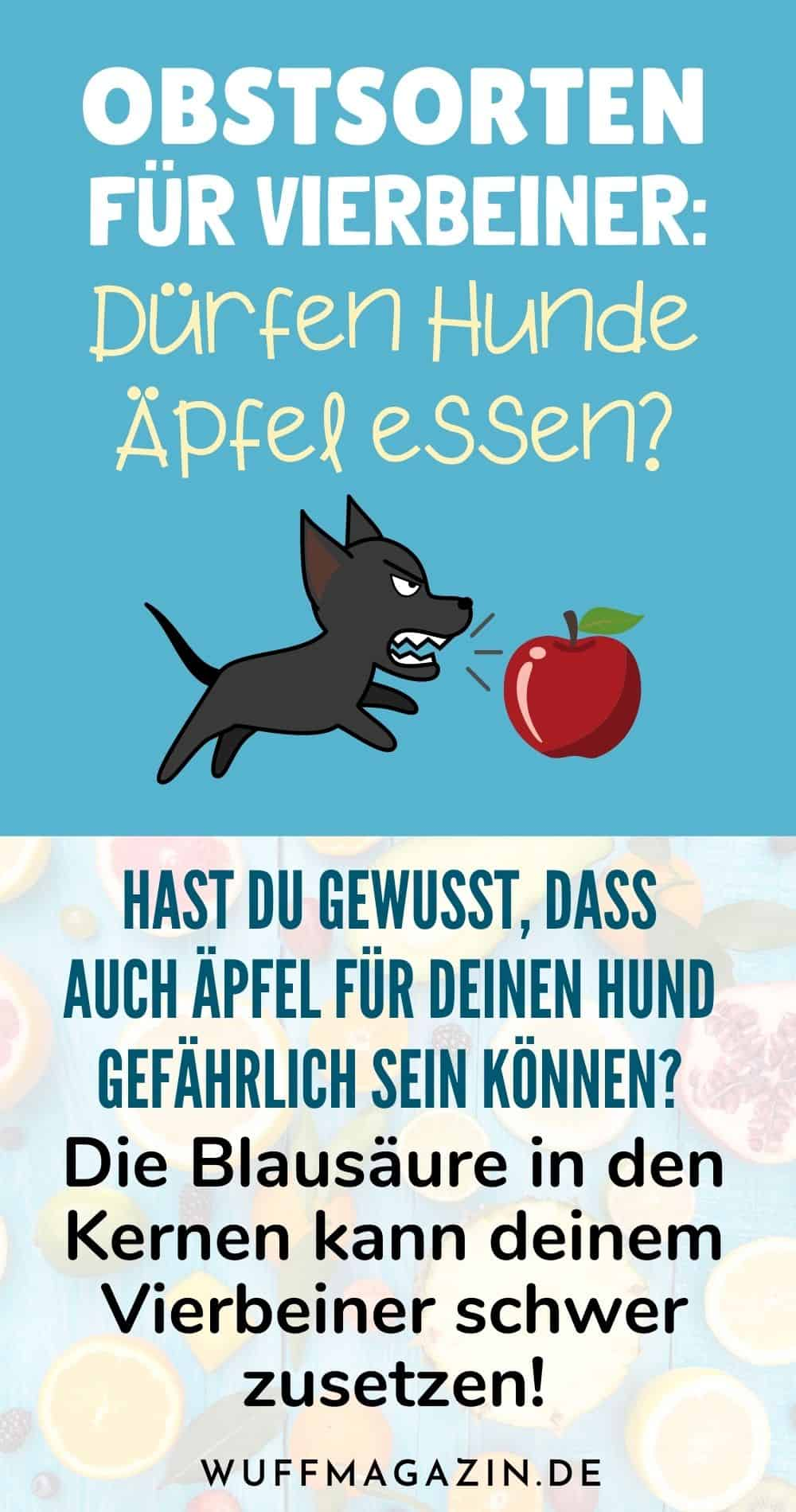 Obstsorten für Vierbeiner Dürfen Hunde Äpfel essen